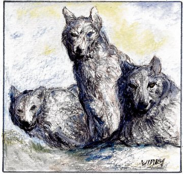 Ireland's last wolves?: the animals probably died out here by 1786. Illustration: Michael Viney