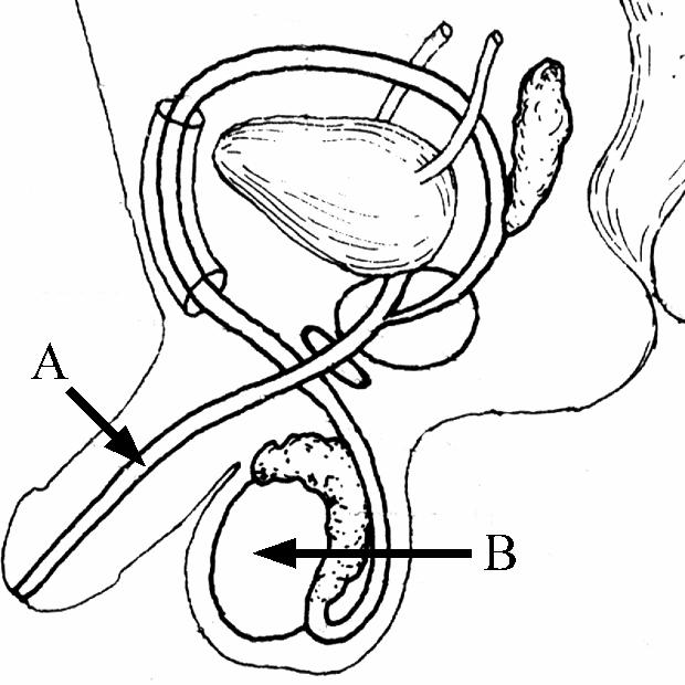 physics lab ohms law diagram
